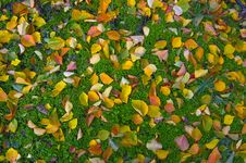 Free Autumn Leaves On The Green Grass Royalty Free Stock Photography - 7851467