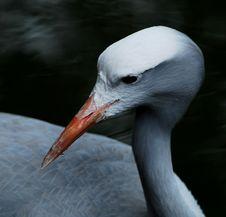 Free Bird Royalty Free Stock Photo - 7851725