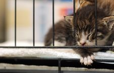 Free Sleepy Kitty Stock Photography - 7852472