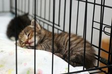 Cute Kitty Sleeping Royalty Free Stock Photography