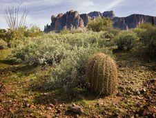 Wilderness Desert Trail Royalty Free Stock Photos