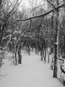 Free Path Into Winter Trees Stock Photo - 7853160