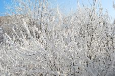 Free Bush Covered By Snow Royalty Free Stock Photography - 7853287