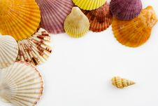 Free Cockleshells Royalty Free Stock Photography - 7853557