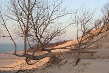 Free A Contorted Tree On The Beach Royalty Free Stock Images - 7853619