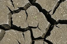 Free Cracked Earth Whit Green Plant. Global Warming Con Royalty Free Stock Images - 7854259