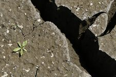 Free Cracked Earth Whit Green Plant / Global Warming C Stock Photo - 7854270