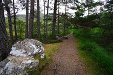 Free Forest Landscape Stock Image - 7854381