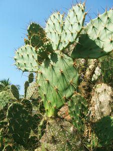 Free Thorny Cactus Stock Photo - 7854450