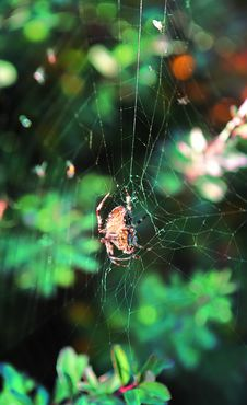 Small Spider In Spider-web With Forest Woods Royalty Free Stock Images