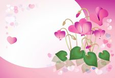 Free Pink Cyclamen On A Pink Background Royalty Free Stock Photography - 7855177
