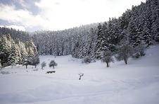 Free Winter Forest... Royalty Free Stock Photos - 7856108