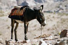 Donkey Inside Petra, Jordan Royalty Free Stock Photos