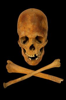 Free Old Prehistoric Human Skull Isolated Royalty Free Stock Photos - 7857468