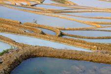 Free Rice Terrace Royalty Free Stock Images - 7857509