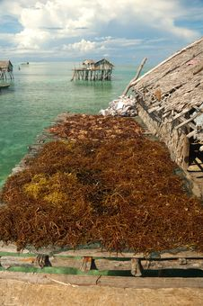 Free Drying Up Sea Weed Stock Photos - 7857533