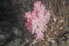 Free Softcoral Stock Photography - 7857912