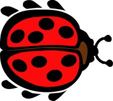 Free Ladybird Royalty Free Stock Photography - 7858137