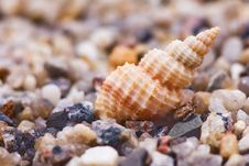 Free Cockleshells Royalty Free Stock Photos - 7858148