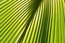 Free Palm Stock Images - 7858244