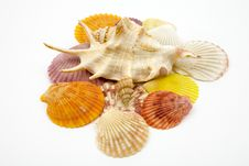 Free Cockleshells Royalty Free Stock Photo - 7859105