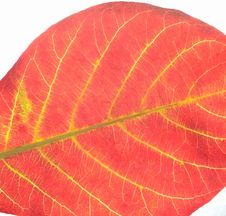 Free Red Leaves Royalty Free Stock Photo - 7859195