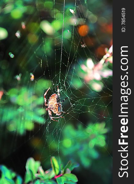 Small spider in spider-web with forest woods