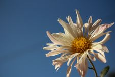 Free Garden Flower Stock Photography - 78519462
