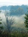Free Morning Fog Stock Photo - 7860510