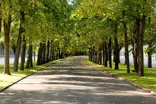Green Alley Stock Images