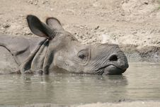 Free Sleeping Rhino Royalty Free Stock Photos - 7861028