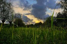 Free Backlit Grass During Sunset Stock Images - 7862074