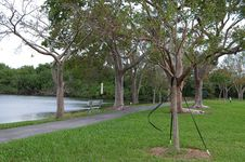 Free Lake By The Park Royalty Free Stock Images - 7862229