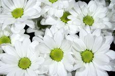Free Flowers Stock Photo - 7862360