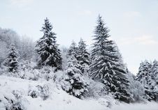 Free Winter Landscape Royalty Free Stock Photos - 7862698