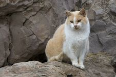 Cat On Rocks Stock Image