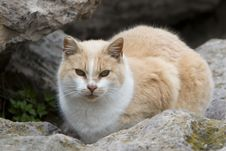 Free Cat On Rock Ledge Royalty Free Stock Image - 7863106