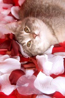 Kitten Resting In Rose Petals Stock Image
