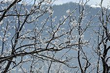 Free Snow Detail Stock Photos - 7863633