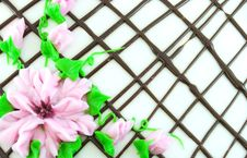 Free Pink Flowers Stock Image - 7863831