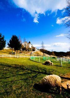 Free Sheeps In Rokkosan Pasture Royalty Free Stock Photos - 7864138