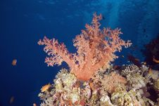 Free Softcoral Stock Images - 7864804