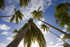 View Into The Sky With Palmtrees Stock Photo