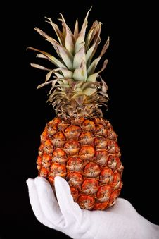 Free A Hand In White Glove Holding A Pineapple Stock Photography - 7865082