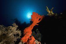 Free Red Boring Sponge Royalty Free Stock Images - 7865369