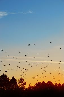 Free Birds In The Evening Royalty Free Stock Images - 7865929