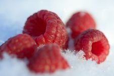 Free Raspberries In The Snow Royalty Free Stock Images - 7866299