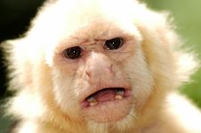 Free Monkey Stock Images - 7866754
