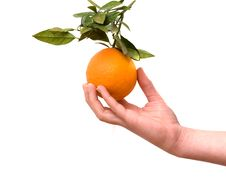 Free Boyl S Hand With Tangerine Stock Photo - 7866850