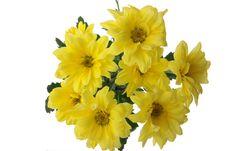 Free Yellow Chrysanthemum Stock Photo - 7868900